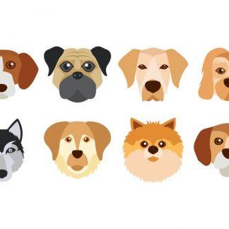 狗狗 Dog --->