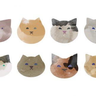 貓咪 Cat --->